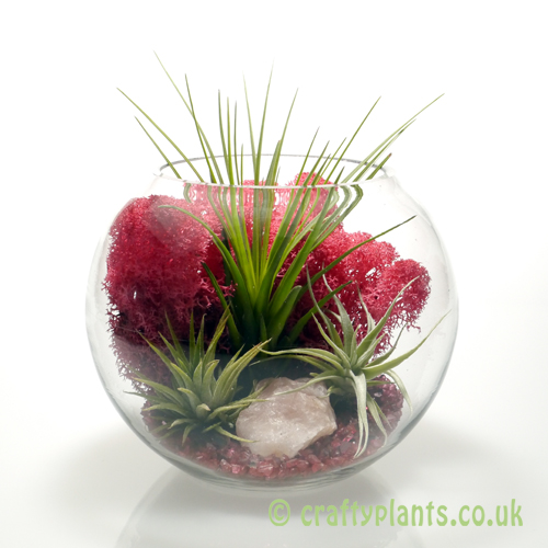 Avec Amour Large Airplant Kit by craftyplants