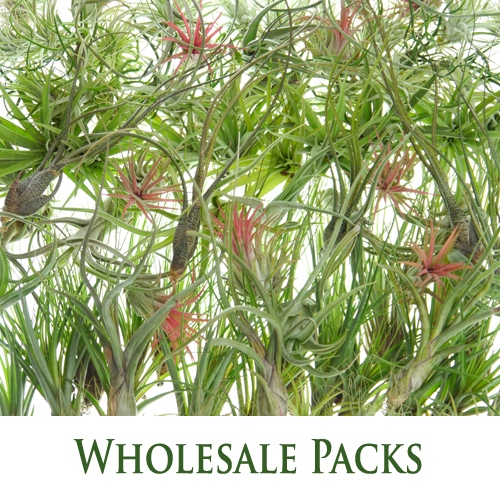 Wholesale Packs by Craftyplants