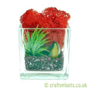 Elements Airplant Kit - FIRE completed arrangement by craftyplants