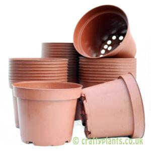 12cm plastic plant pots by craftyplants